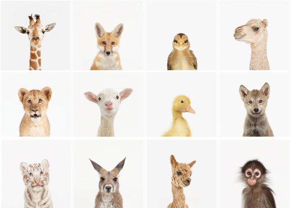 Five Friday Finds: Baby Animals, Food Photography and YOUR ...