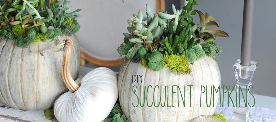 succulentpumpkinscarousel